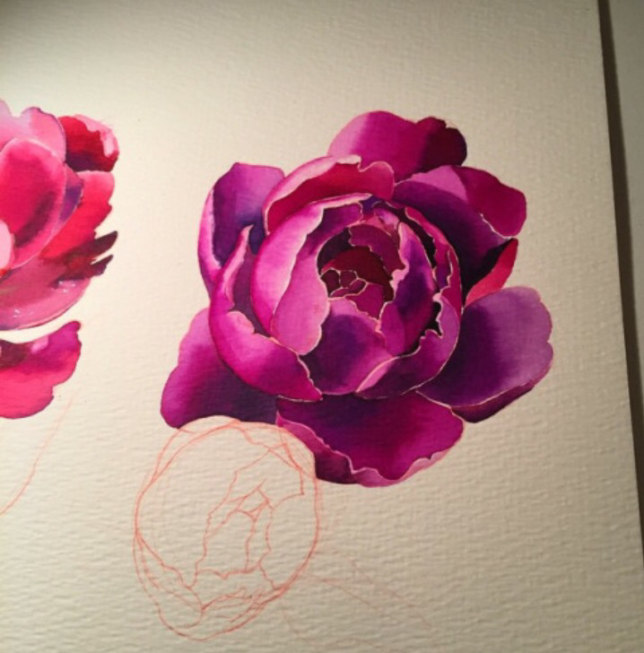 Drawn peony colored Guy if tattoo if Flowers