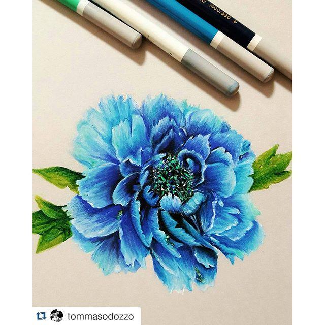Drawn peony colored ・・・ with @repostapp Instagram #