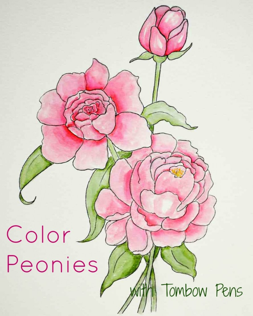 Drawn peony colored Tombow Peonies with  Brush
