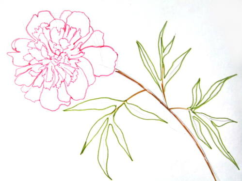 Drawn peony delicate flower Imagine flower the and if