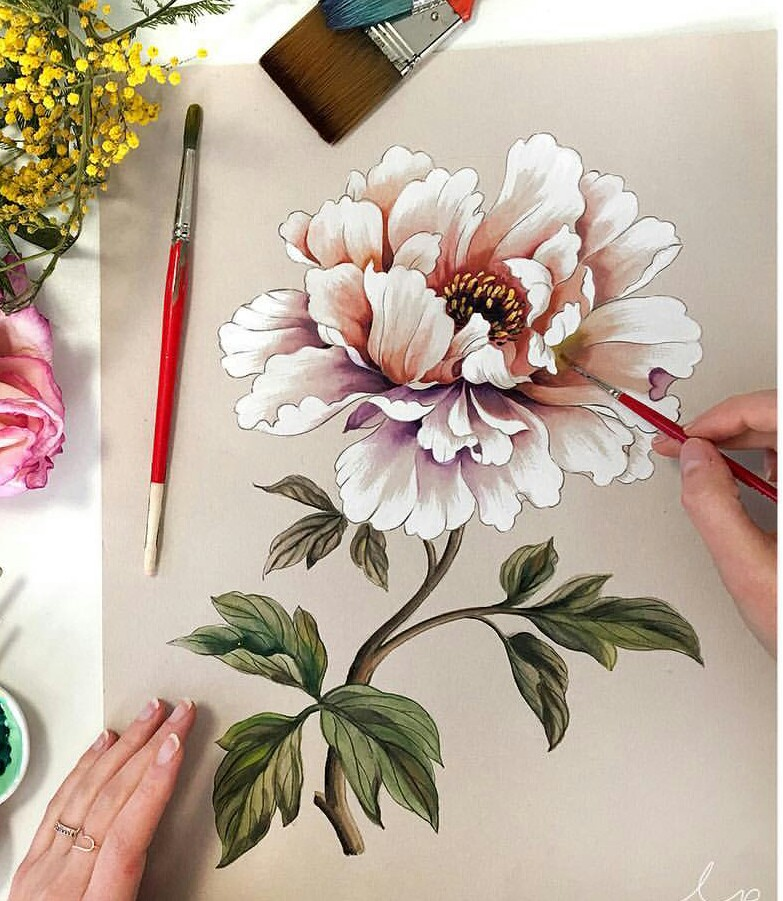 Drawn peony delicate flower Peony drawing drawing Pinterest flower