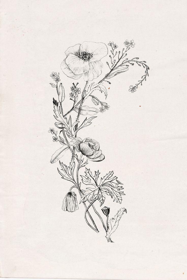 Drawn peony delicate flower In illustration #idea Flower 25+