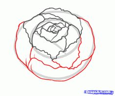 Drawn peony easy Flower draw step to how