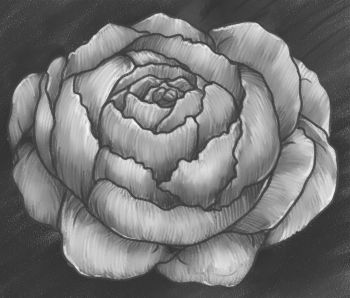 Drawn peony easy Flower draw 99 to how