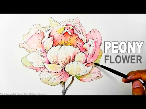 Drawn peony easy Peony Draw Flower to with