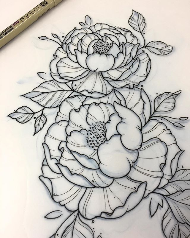 Drawn peony easy Outline great on 25+