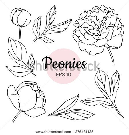 Drawn peony easy & Drawn Pictures Hand Plants