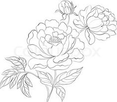 Drawn peony easy For a Tuesday: of drawing