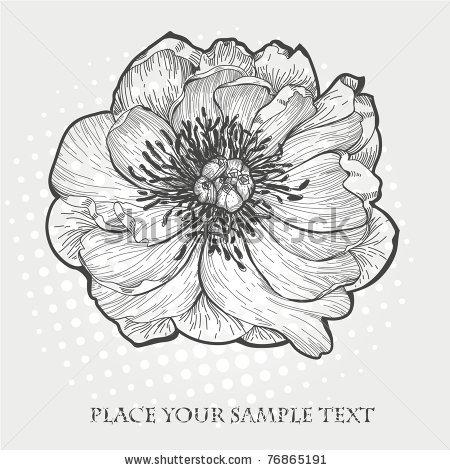 Drawn peony flower bucket Vector vector hand drawn a