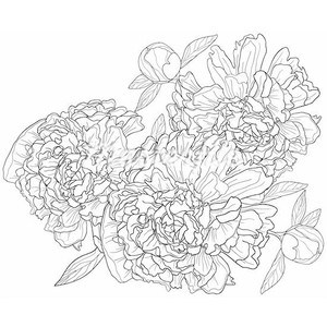 Drawn peony flower png Monochrome Polyvore with Vector illustration
