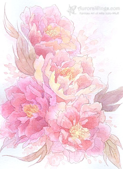 Drawn peony flower png Google Peonies ideas and Search
