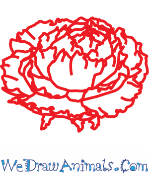 Drawn peony flower png To a Flower Tutorial How