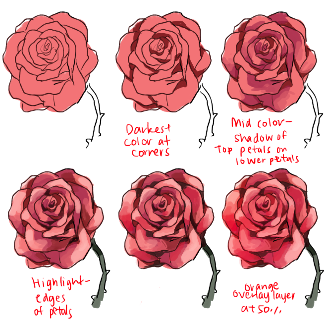 Drawn peony flower png Roses Imgur peonies to draw