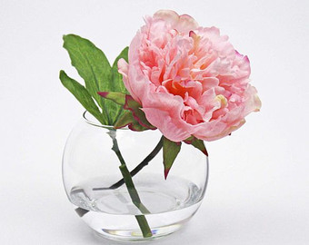 Drawn peony flower vase Glass water Light pink faux