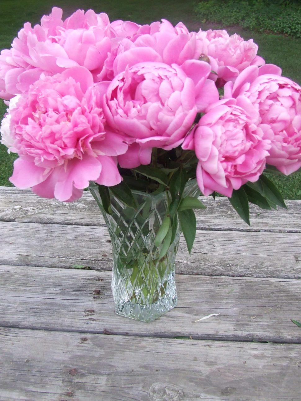 Drawn peony flower vase Vase Peonies Flowers  About
