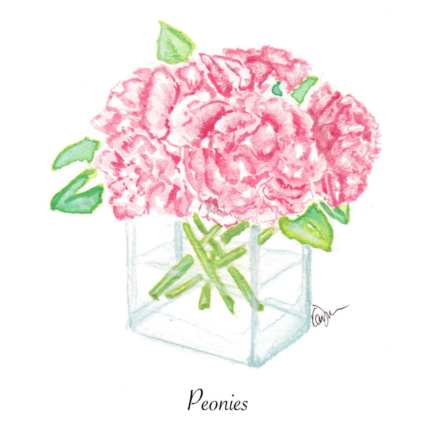 Drawn peony flower vase Pink a a Chic in