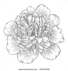 Drawn peony hand drawn Black on background and +by+Roman84