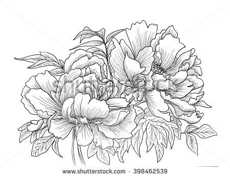 Drawn peony illustration Illustration isolated drawn Beautiful flowers