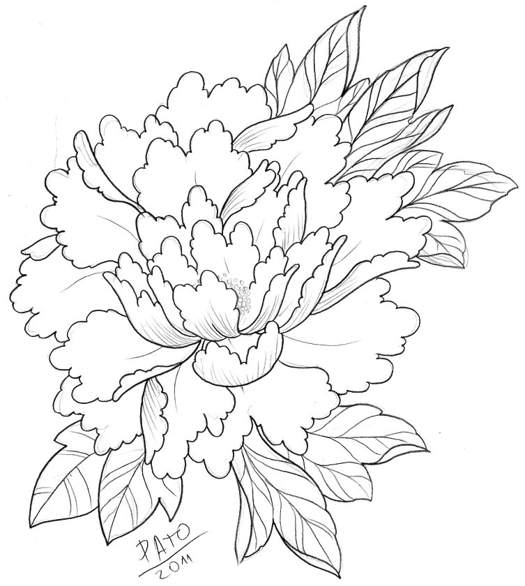 Drawn peony japanese Design Japanese Lovely great for