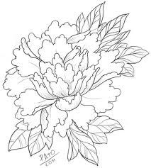 Drawn peony line drawing Page Sketch Coloring peony Drawing