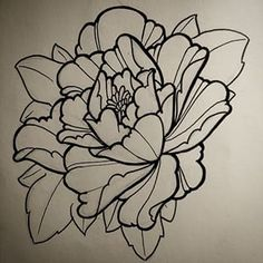 Drawn peony line drawing Shutterstock & Pictures drawing Images