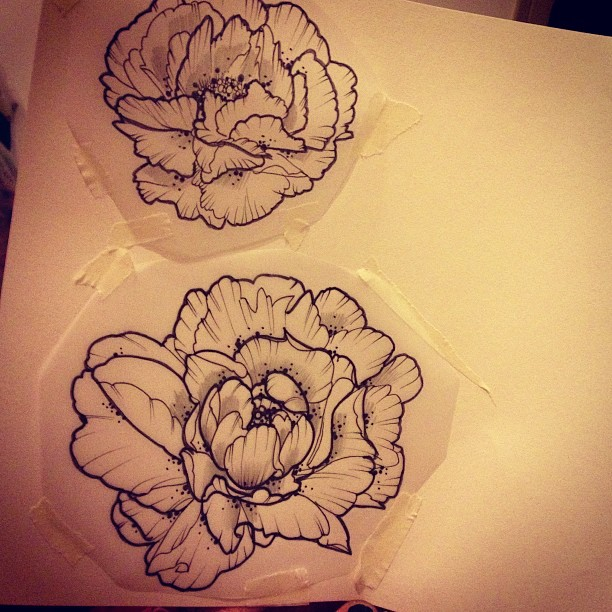 Drawn peony line drawing Smaller another with another with