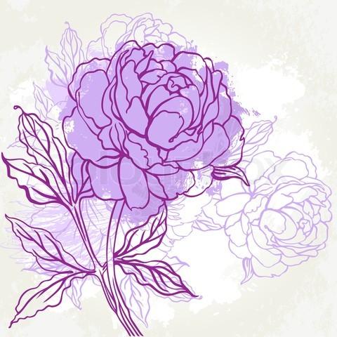 Drawn peony old fashioned flower Illustration peony  vintage peony