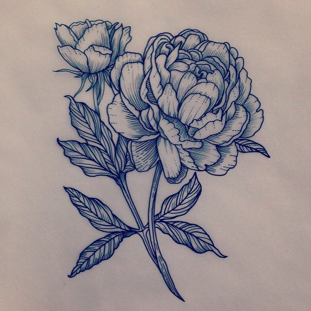 Drawn peony old fashioned flower · TattooPeonies Drawing Más ▫