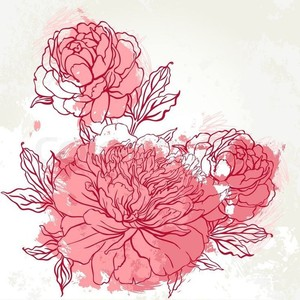 Drawn peony peonie Drawing Pinte pics background