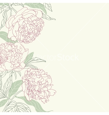 Drawn peony peonie Drawing by vector vector flowers