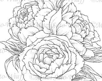 Drawn peony peony bouquet Digital Stamp Instant Peony Peony