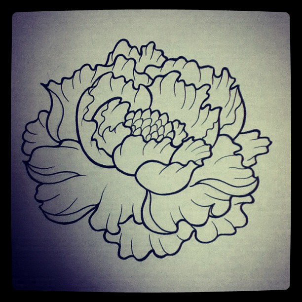 Drawn peony peony flower Shitload had to of seems