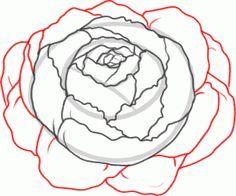 Drawn peony peony flower Draw ideas Flowers How a
