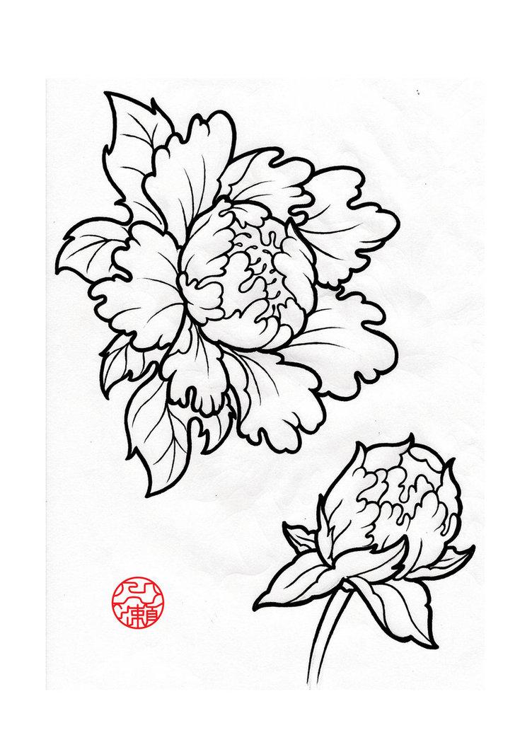 Drawn peony peony flower Google Peony peony Search Pinterest