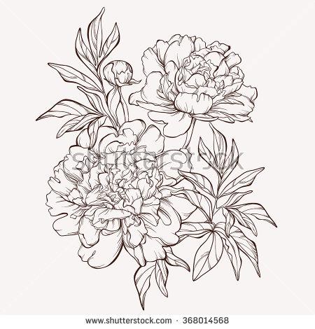 Drawn peony peony flower  flower isolated Hand background