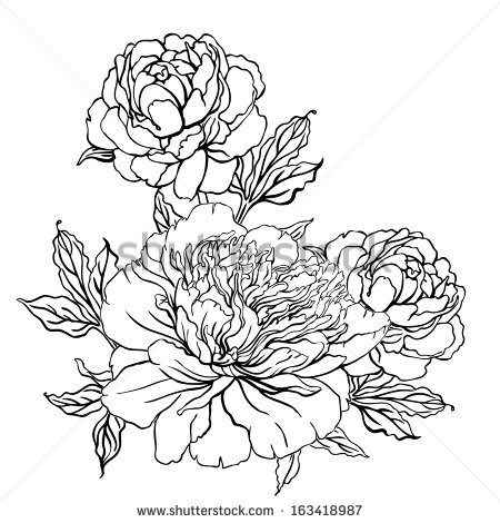 Drawn peony peony flower Hand background on Vector Peony: