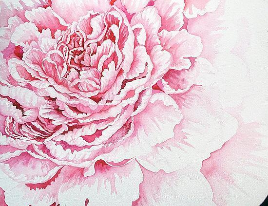 Drawn peony pink peony Pale Helen  (Watercolor Klebesadel