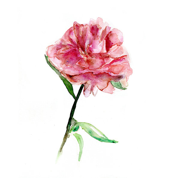 Drawn peony pink peony Flower Flower Original painting Watercolor