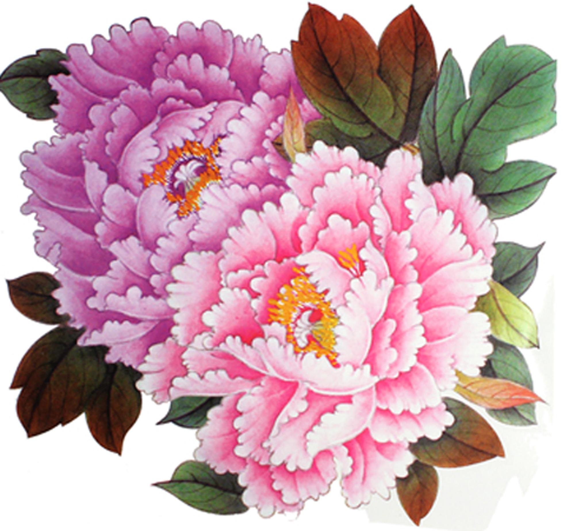Drawn peony pink peony Large flower 07 tattoos temporary