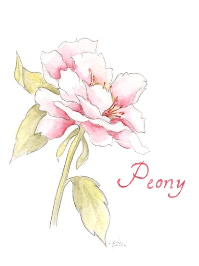 Drawn peony simple Peony best about 30 images
