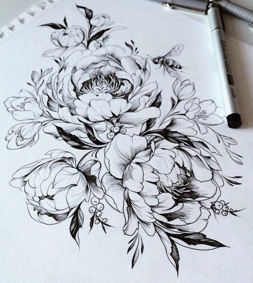 Drawn peony sketch On Peony drawing ideas (518×580)