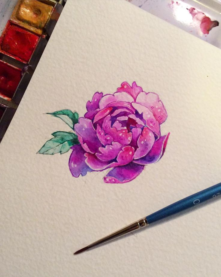 Drawn peony sketch Drawing ideas DrawingDrawing out Pinterest