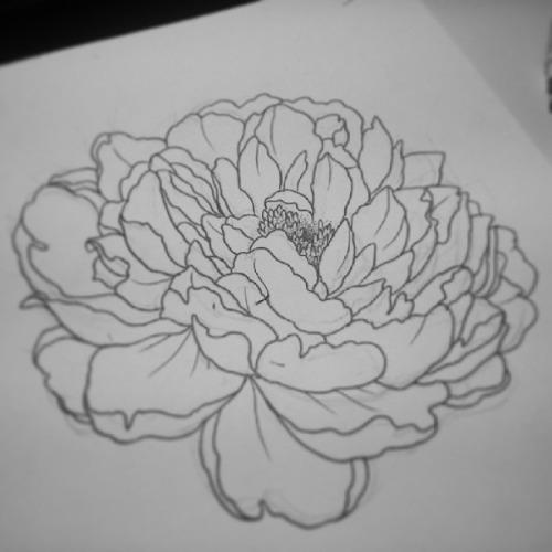 Drawn peony sketch Tattoo client tattoo Design tumblr