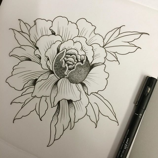 Drawn peony sketch On sketch flower drawing today