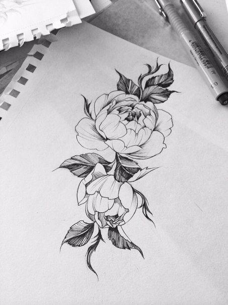 Drawn peony sketch Ideas on Pinterest 868 drawing
