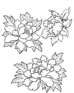 Drawn peony traditional japanese flower Of images 98 Peonies Chrysanthemums