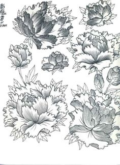 Drawn peony traditional japanese flower Flowers peony Pinterest com Designs