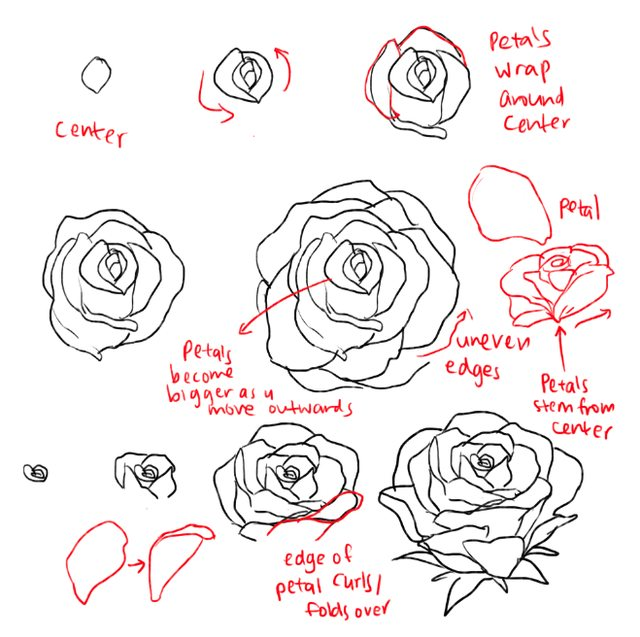 Drawn peony tutorial Pinterest roses Drawing Imgur and
