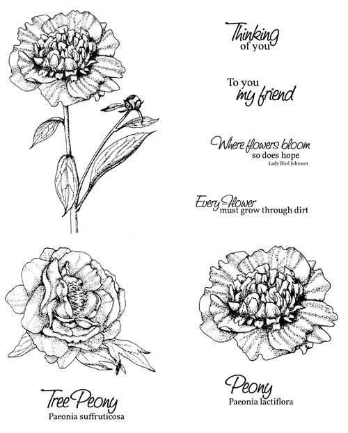 Drawn peony tutorial Stamps new Projects digi Garden