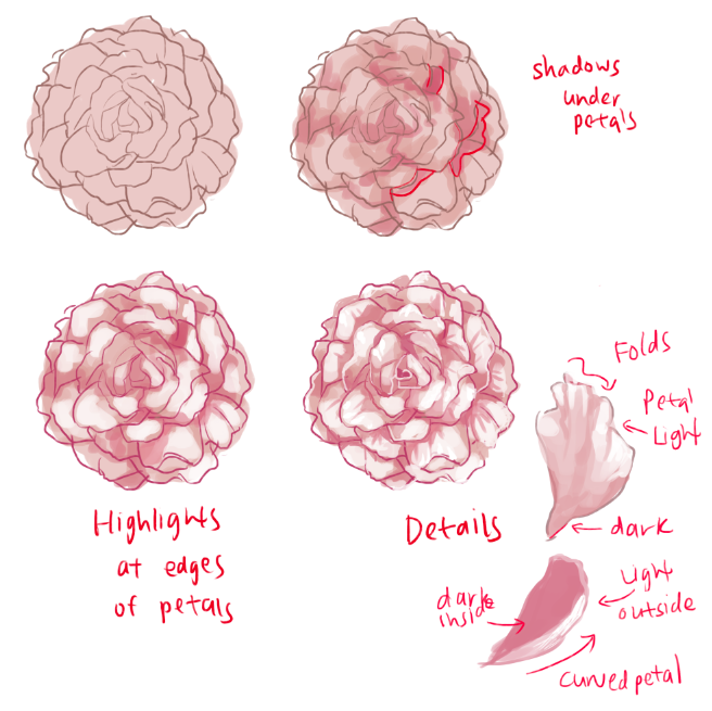 Drawn peony tutorial  ARE drew OF so